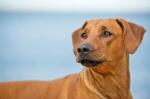 hund-portrait-bild-myphotobook
